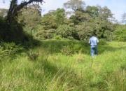Vendo finca de 4 hectareas en coronado $8.50 m2