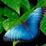Liberacion de Mariposas Vivas en eventos sociales Costa Rica