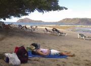 Alquiler en playas del coco