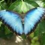 Mariposas vivas para bodas y quinceaños