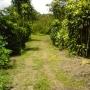 Se vende finca de 4 hectareas en Palmares de Alajuela