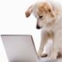 Busca o publica tu mascota en CRMascotas.com