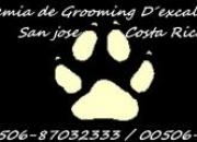 peluqueria canina   cursos