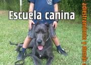 Adiestramiento y perros de seguridad