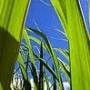 PROMO DE BRONCEADO DEL 20 AL 31 DE OCTUBRE 2010