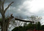 Corte, poda, cuidado de arboles y limpieza de canoas - Costa Rica
