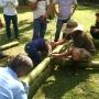Guadua colombia