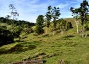 Se vende 24 hectáreas