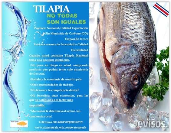 Tilapia 100% costarricense