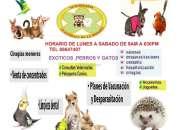 Servicio veterinario exoticos erizos, conejos, cobayos,tortugas, loras, perico