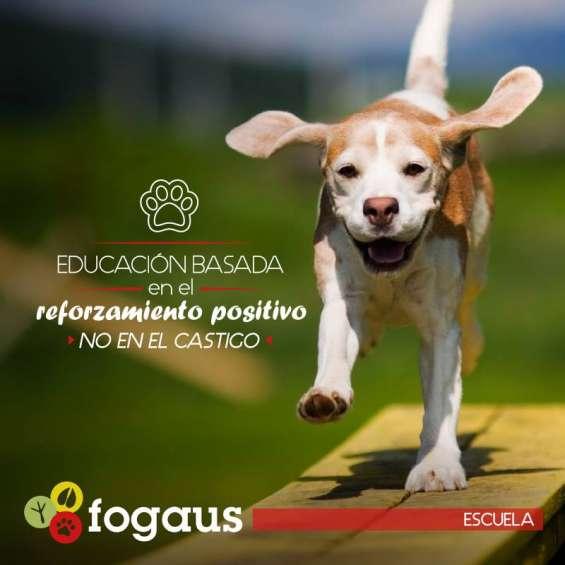 Adiestramiento canino alajuela. escuela de educación canina fogaus